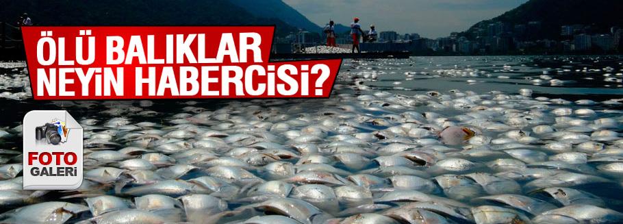 Ölü balık sürüleri korkuttu!