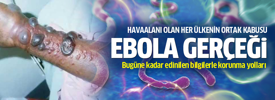 ebola virus reflection Spillover - zika, ebola & beyond explores what's behind the increase in diseases spilling over from animals into humans.