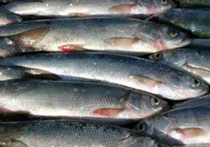 Eminönü'nde balık ekmek keyfi 4 TL