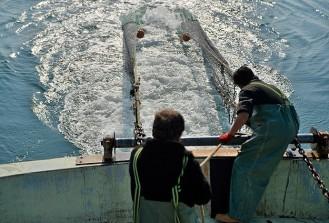İstanbul'da balıkçıların hedefi 50 bin ton balık avlamak