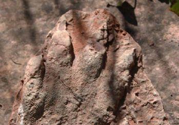 İspanya'da 230 milyon yıllık ayak izi fosili bulundu