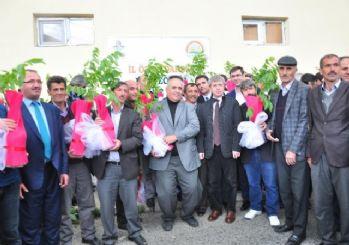 Bitlis'te 30 Bin Adet Sertifikalı Ceviz Fidanı Dağıtıldı