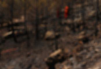 Teröristler, orman işçilerini rehin alıp ormanı yaktılar