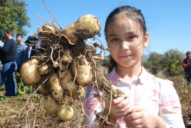 Türkiye'nin ilk 'beyaz patates'inde hasat yapıldı