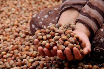 İtalyan Tarımcılar Derneğinin 'fındık' açıklamasına tepki