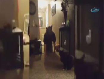 Kediye 'kurt adam' şakası yapılırsa...