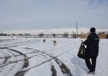 Sungurlu Belediyesi Sokak Hayvanları İçin Yem Bıraktılar