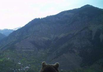 Artvin'de ayının köye bakışı fotokapana yakalandı