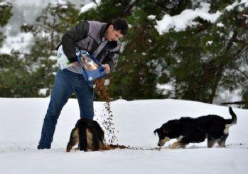 Konyaaltı Belediyesi sokak hayvanlarını unutmadı