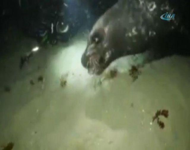 Büyük balık küçük balığı yutar atasözü gerçek oldu