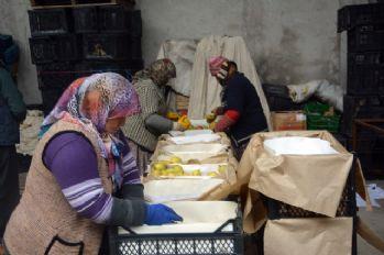 Ortadoğu'ya elma ihracatı başladı