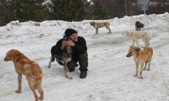 Köpekleri doyurmak için her gün 50 kilometre gidiyor