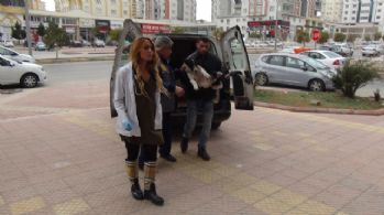 El Bab'da yaralanan sokak köpeği Gaziantep'e getirildi
