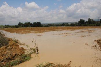 Yağış yüzlerce dönüm ekili araziye zarar verdi