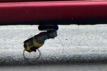 Otomobildeki bomba düzeneği polisi alarma geçirdi