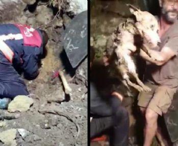Cihangir'de 5 saat süren köpek kurtarma operasyonu