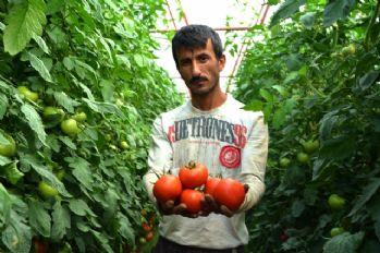 Karatay'ın domates açıklamasına tepki bitmiyor