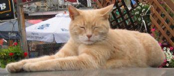 Kedi belediye başkanı öldü