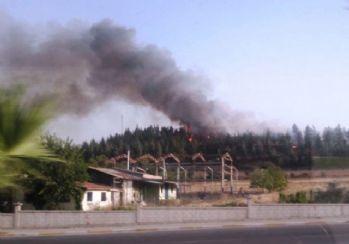 Denizli'de orman yangınına 1 gözaltı