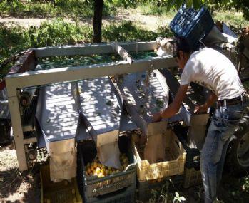 Kayısı üreticilerinin işini kolaylaştıracak makine tasarlandı