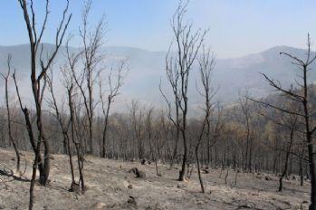 500 hektarda etkili olan yangın kısmen kontrol altında