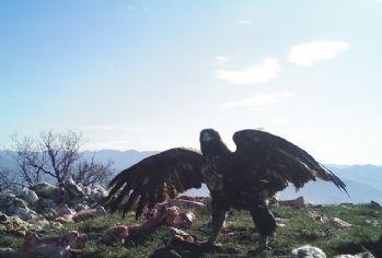Ankara'nın yanı başındaki vahşi hayat foto kapanında