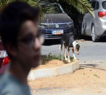 Saldırgan köpekler yüzünden mahalleli dışarı çıkamıyor