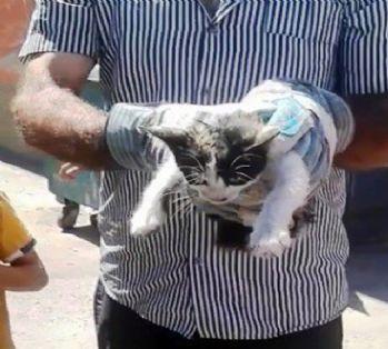 Aracın motoruna sıkışan kedi için seferber oldular