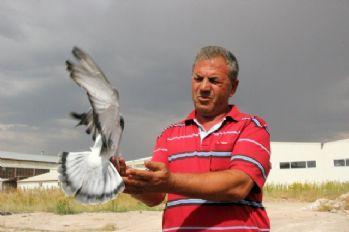 Bulduğu güvercinin sahibini arıyor