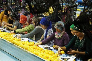 Limon ve mandalinanın 'fahiş fiyat' yolculuğu