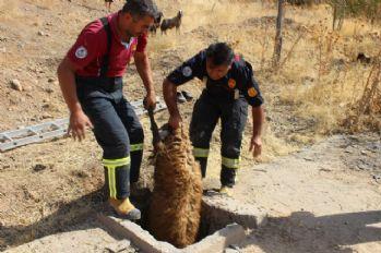 Kuyuya düşen 37 koyun kurtarıldı