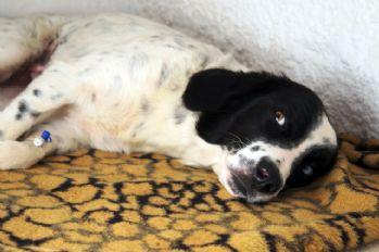 'Köpeğe tecavüz' iddiasına linç girişimi