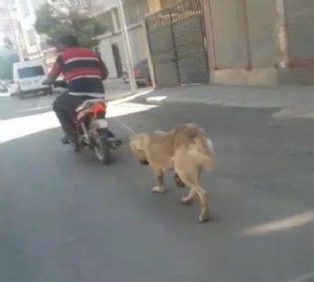 Köpeğin boğazına ip geçirip motosikletle sürükledi