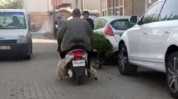 Motosiklette koyun var