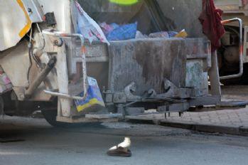 Çöp atarken kamyonun altında can verdi