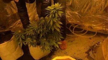 Uyuşturucu yetiştirmek için evine sera kurmuş