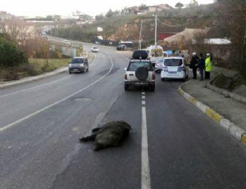 İstanbul'da yaşandı: Yola inen domuz telef oldu