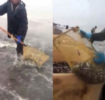 Rusya'da hamsi sahile vurdu