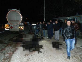 Tanker sürüye daldı: Çoban öldü !
