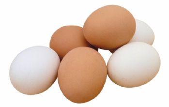 Tavuk yumurtası üretimi yüzde 3,8 arttı