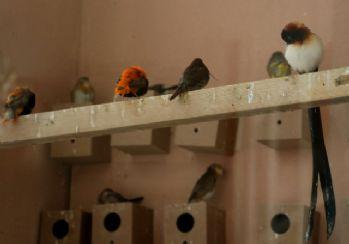 105 türde kuş bir arada