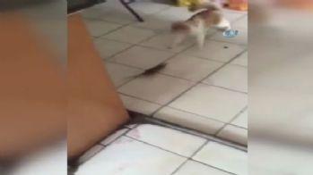 Bu kez fare kediyi kovaladı
