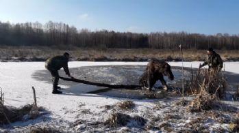 Donmuş gölde mahsur kalan geyik kurtarıldı
