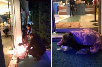 Üşüyen köpeği battaniyeye sarıp, ısıtıcı ile ısıttılar