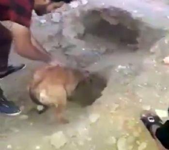 Toprak altında kalan yavrularını kurtarmayı başardı