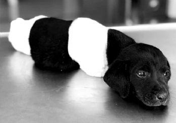 Cumhurbaşkanı Erdoğan: Yavru köpek için talimat verdim!