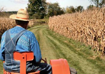 Hazine arazileri çiftçilere kiralanıyor!