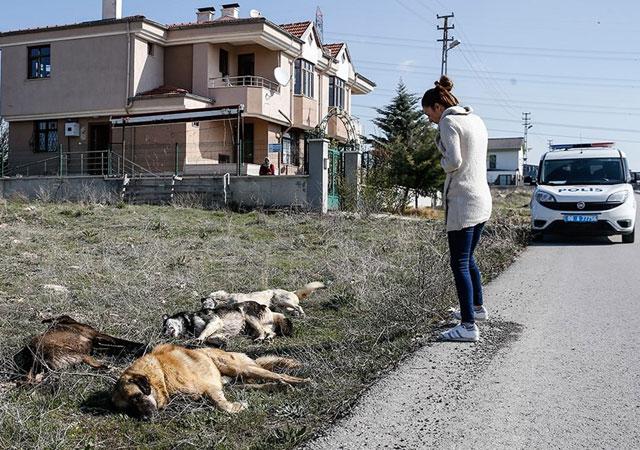 Ankara'da yine köpek vahşeti!