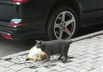 Sultangazi'de kedilerin kuyrukları neden kesiliyor? Büyü mü?