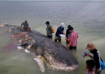 Ölü balinanın midesinden 1000 parça plastik çıktı